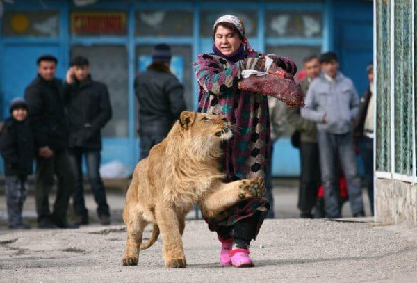 حیوانات (2)