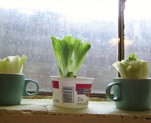 کاشت سبزیجات  (10)