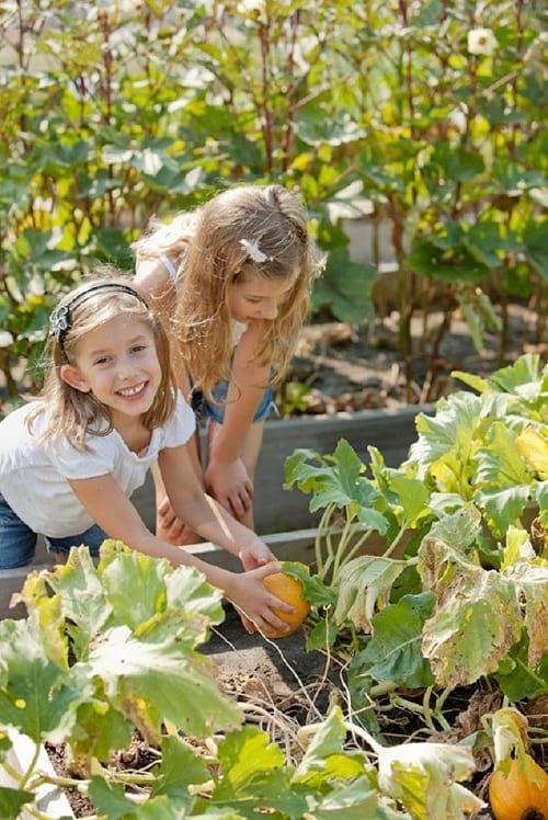 کاشت سبزیجات  (8)