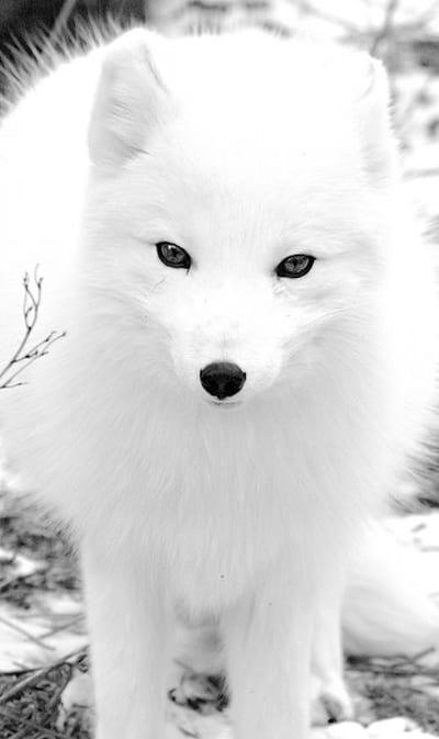 حیوانات قطبی (3)