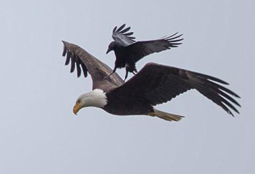 عقاب سواری (2)