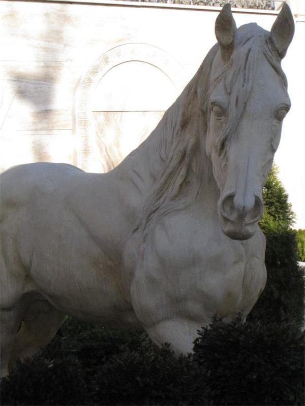 اسب (2)