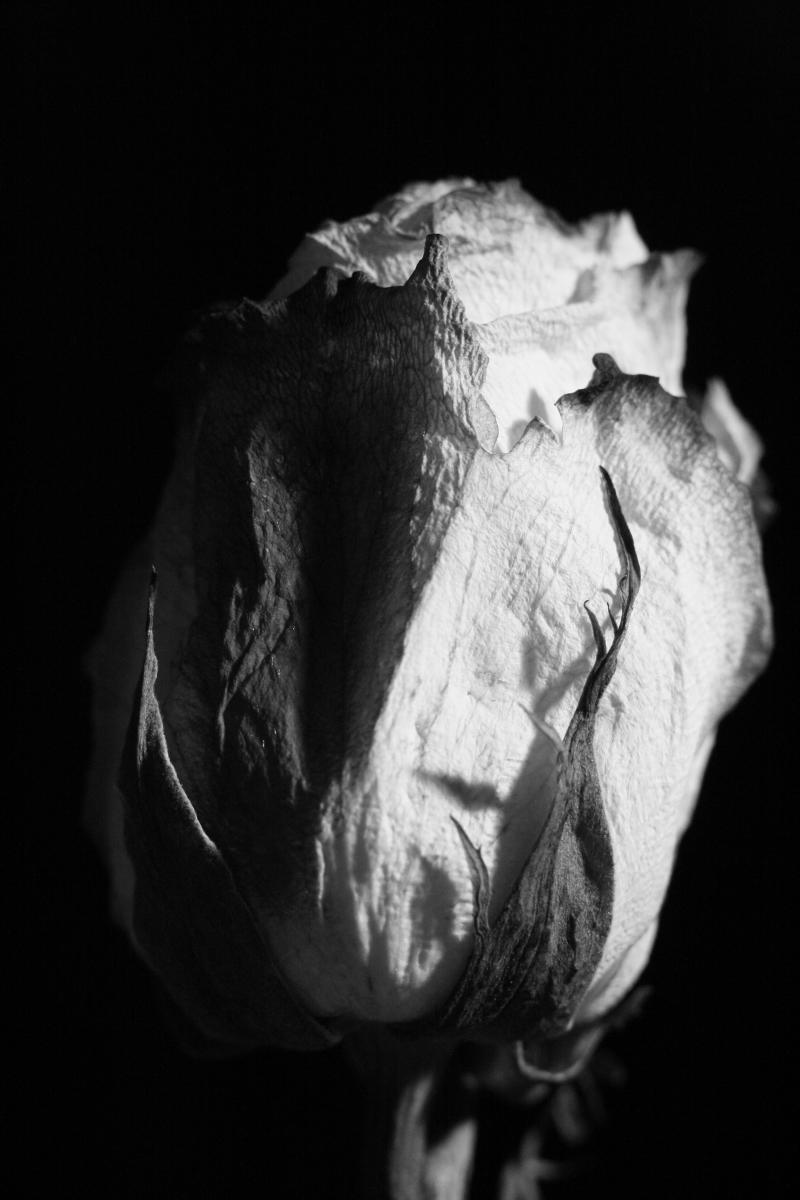 عکس سیاه و سفید (1)