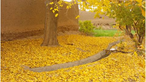 پاییز در روستای ریاب