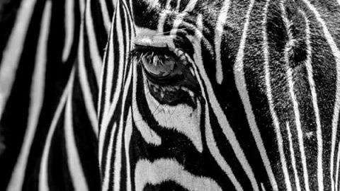 عکاسی سیاه و سفید (۳)