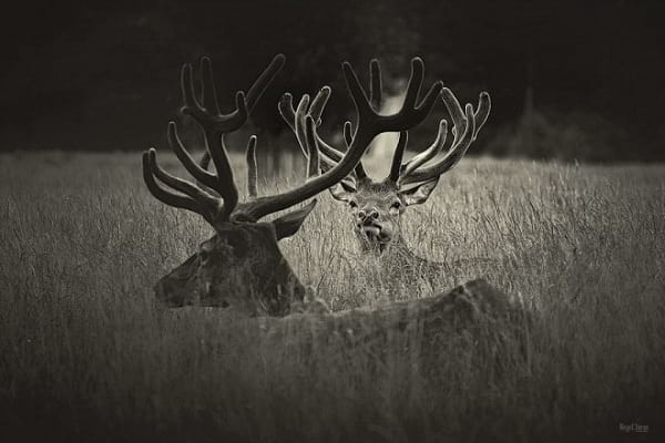 عکاسی سیاه و سفید (17)