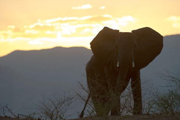 پارک ملی زیمبابوه