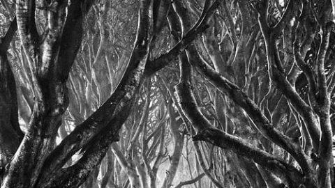 عکاسی سیاه و سفید (۲)