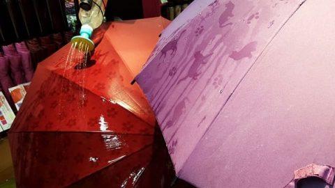چتری که زیر باران شکوفه می کند!
