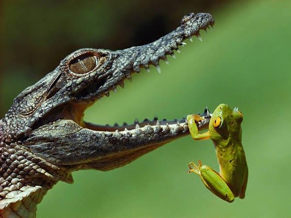 شگفتی های دنیای حیوانات (6)