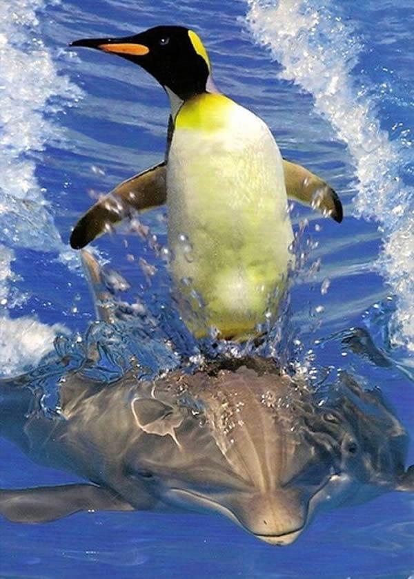 شگفتی های دنیای حیوانات (9)