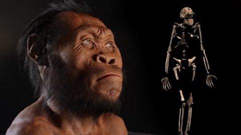 """تحقیقات جدید روی فسیل """"هومو نالدی"""" اجداد دور انسان"""