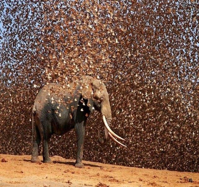 مهاجرت حیوانات (11)