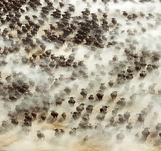 مهاجرت حیوانات (14)