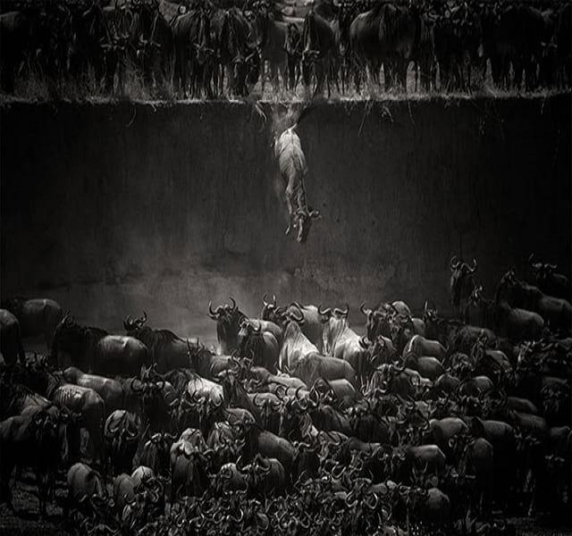 مهاجرت حیوانات (19)