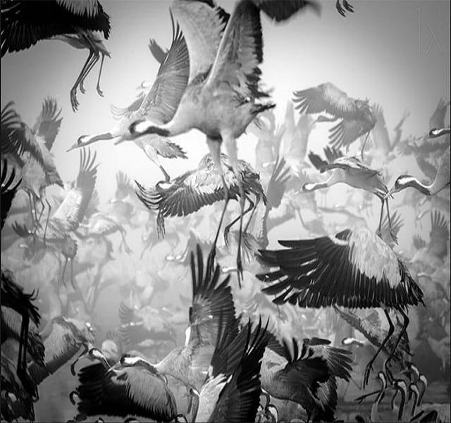 مهاجرت حیوانات (29)