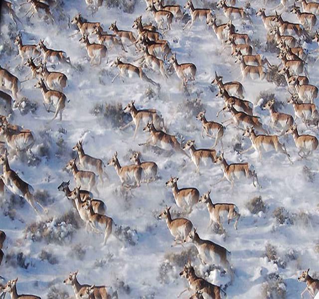 مهاجرت حیوانات (30)