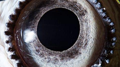 چشم حیوانات را از این فاصله دیده بودید؟
