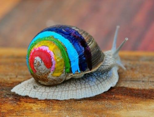 حلزون رنگی (4)