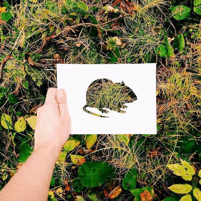 حیوانات با پوشش طبیعت (4)