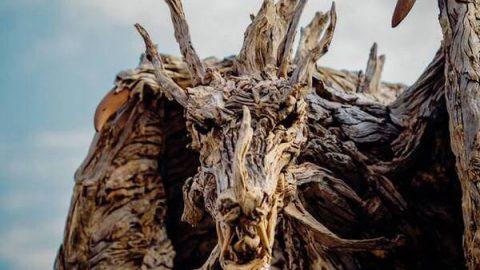 خلق مجسمه های زیبا از چوب های آب آورده!