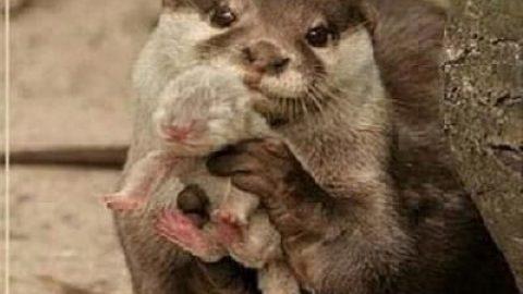 مهر مادری (۲)