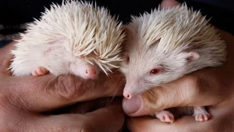 نازترین موجودات کوچک دنیا