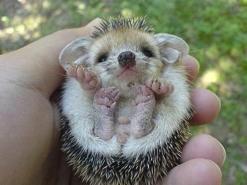 نازترین موجودات کوچک دنیا  (12)