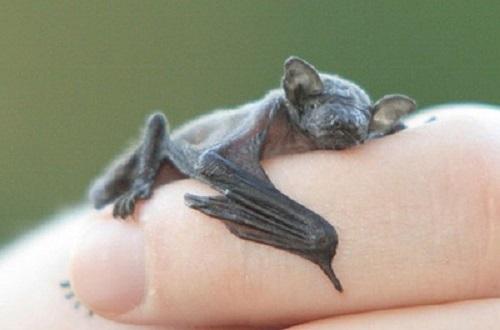 نازترین موجودات کوچک دنیا  (14)