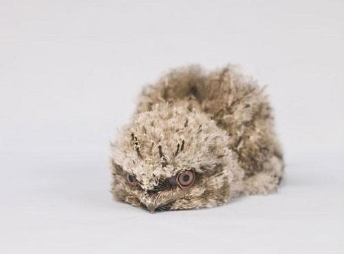 نازترین موجودات کوچک دنیا  (2)