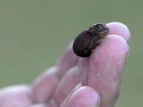 نازترین موجودات کوچک دنیا  (3)