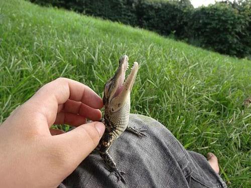 نازترین موجودات کوچک دنیا  (4)