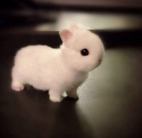 نازترین موجودات کوچک دنیا  (5)