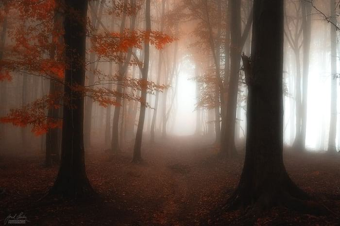پاییز (10)