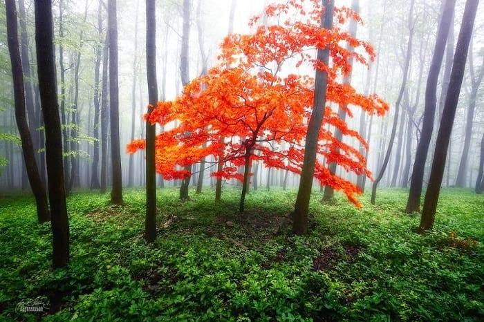 پاییز (11)