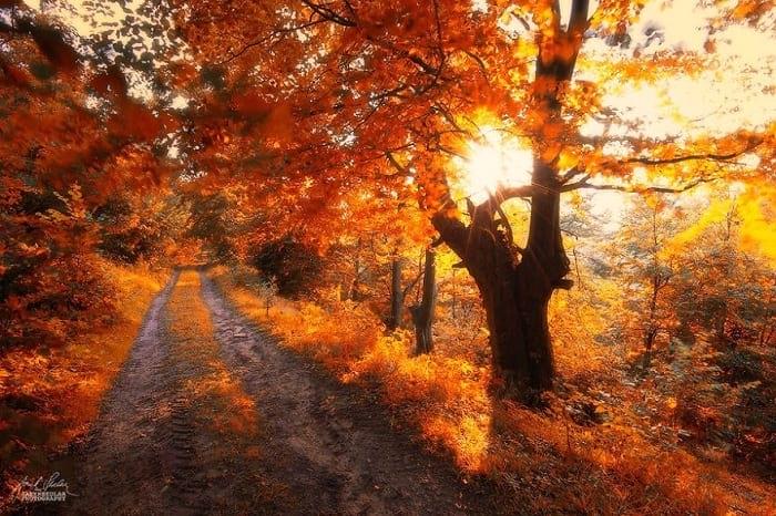 پاییز (15)
