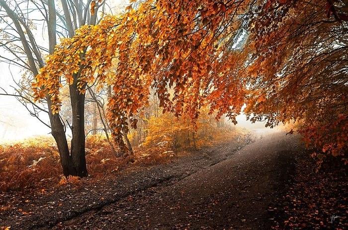 پاییز (18)