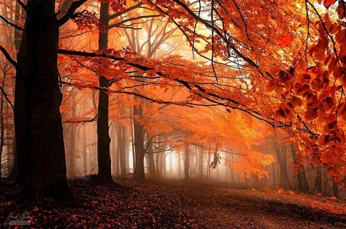 پاییز (2)