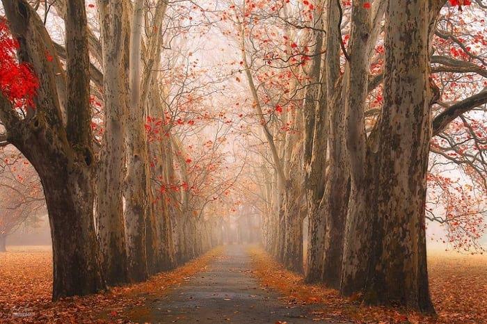 پاییز (3)