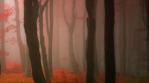 عکاسی از فصل رنگارنگ پاییز