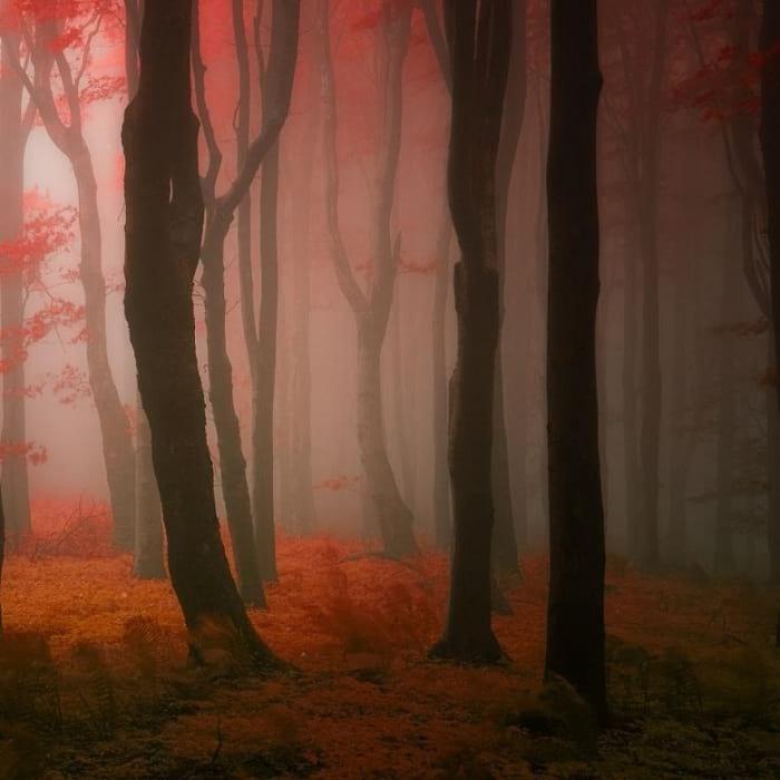 پاییز (4)