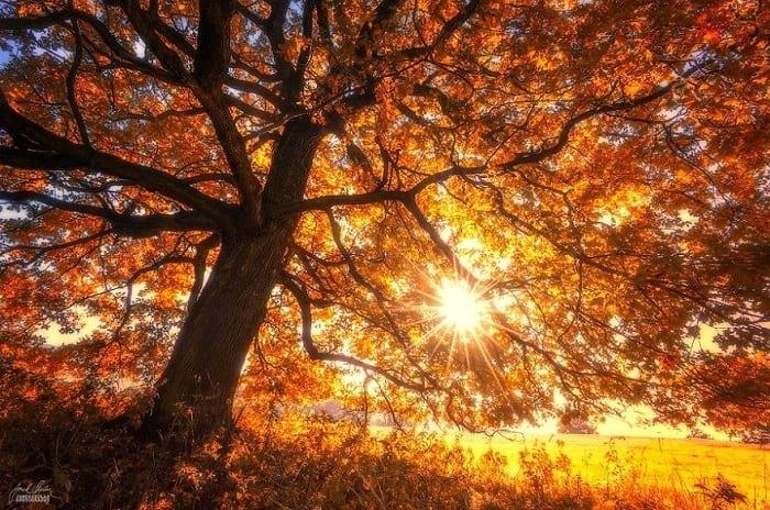 پاییز (7)