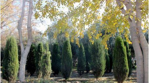 پاییز در بوستان مادر