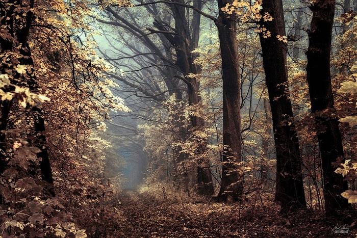 پاییز (8)