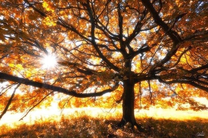 پاییز (9)