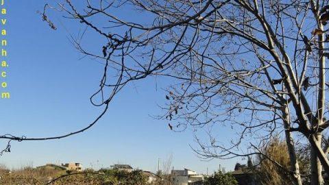پاییز در آمل