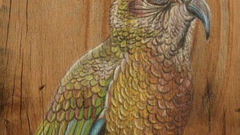 پرتره های زیبا از پرندگان