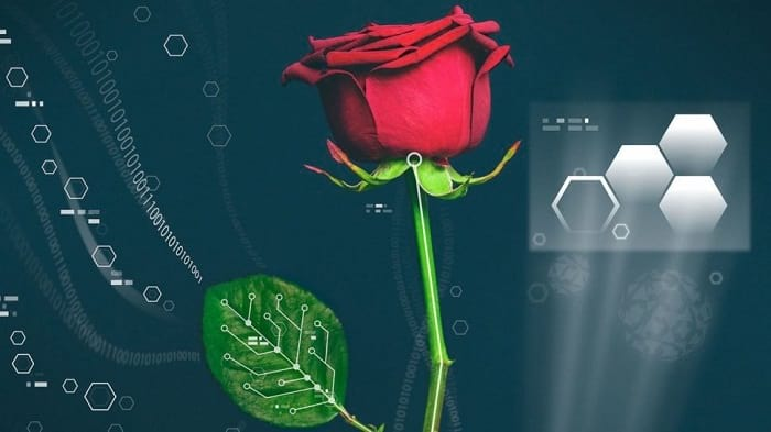 ابداع موفقیتآمیز اولین گل رز طبیعی دیجیتالی جهان!