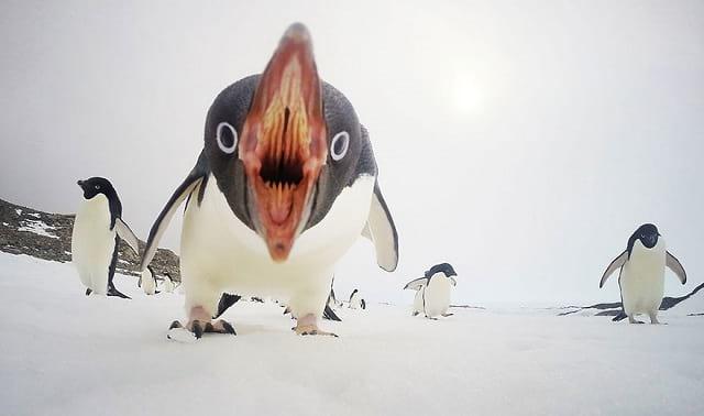 پنگوئن ها با موضوع طبیعت