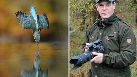 ثبت عکس مرغ ماهیخوار هنگام شیرجه در آب پس از ۶ سال